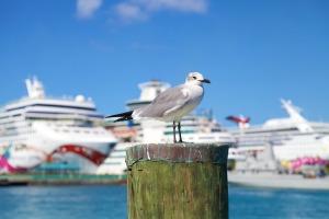 seagull-4076549_960_720