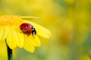 insects-4489864_640